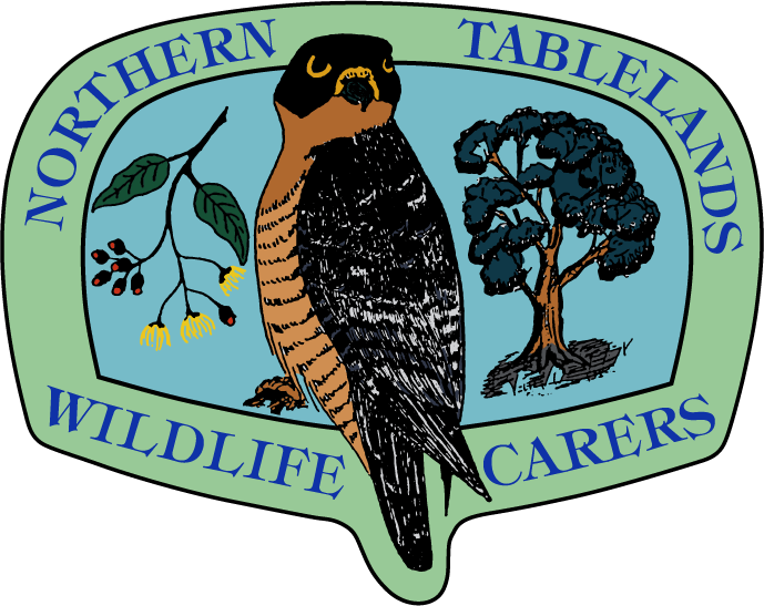Northern Tablelands Wildlife Carers